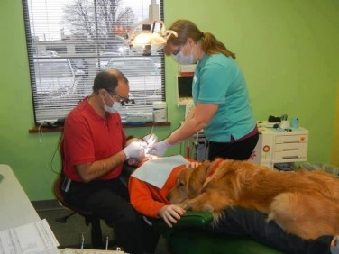 "Neobičan ""asistent"" dječijeg zubara dr Paul Weiss-a petak (2)"