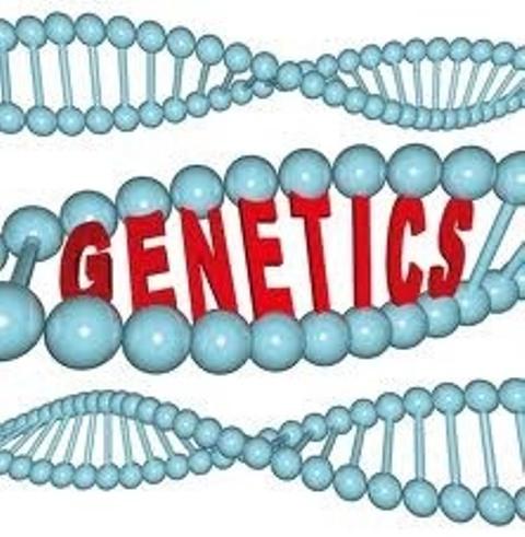 Genetički faktori koji utiču na zdravlje zuba ponedeljak